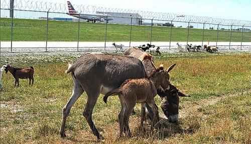 7 động vật được thuê làm nhân viên sân bay - 3