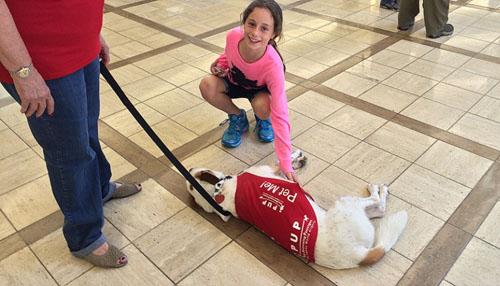 7 động vật được thuê làm nhân viên sân bay - 6
