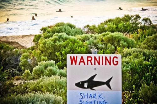 Đeo lục lạc cho cá mập - 1