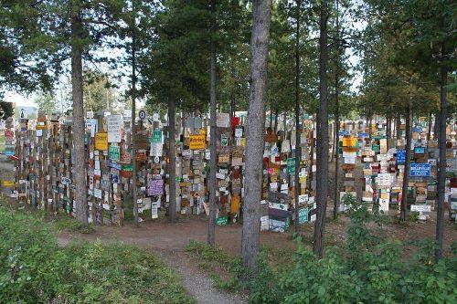 Khu rừng biển báo nằm bên cao tốc alaska - 2