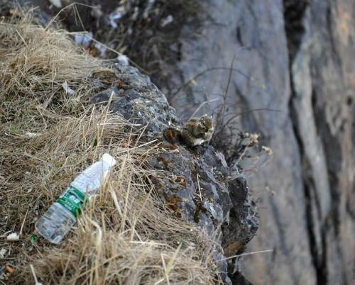 người nhện nhặt rác trên vách núi cao - 2