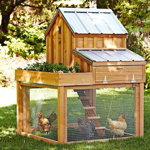 Những chuồng gà sạch và đẹp như ngôi nhà nhỏ - 1