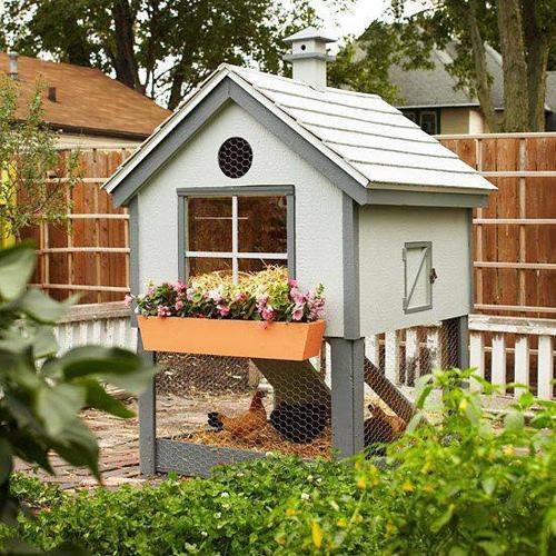 Những chuồng gà sạch và đẹp như ngôi nhà nhỏ - 2
