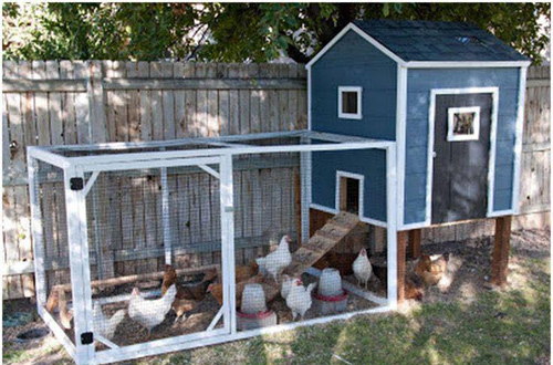 Những chuồng gà sạch và đẹp như ngôi nhà nhỏ - 3