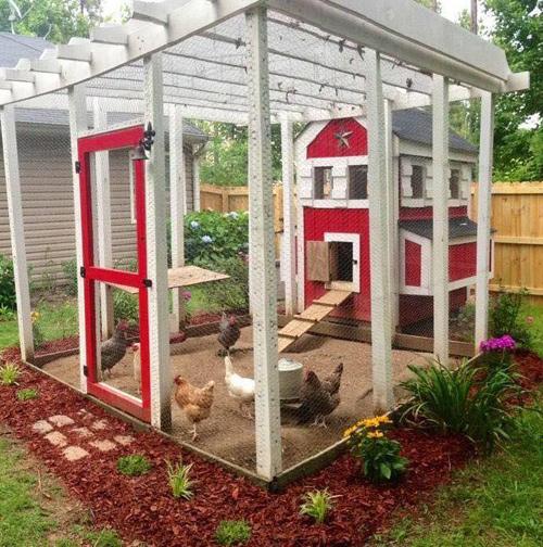 Những chuồng gà sạch và đẹp như ngôi nhà nhỏ - 4
