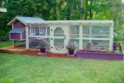 Những chuồng gà sạch và đẹp như ngôi nhà nhỏ - 5
