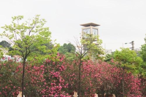 Ngất ngây với vẻ đẹp của giống hồng cổ châu âu ở sapa - 1