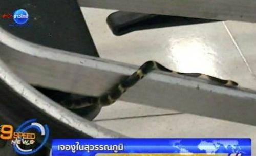 Sân bay bangkok xin lỗi vì rắn xuất hiện trên xe đẩy hành lý - 1