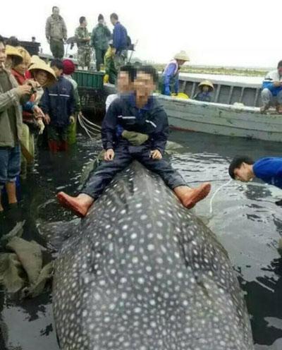Ca mập hơn 1000 kg sa lưới ngư dân trung quốc - 1