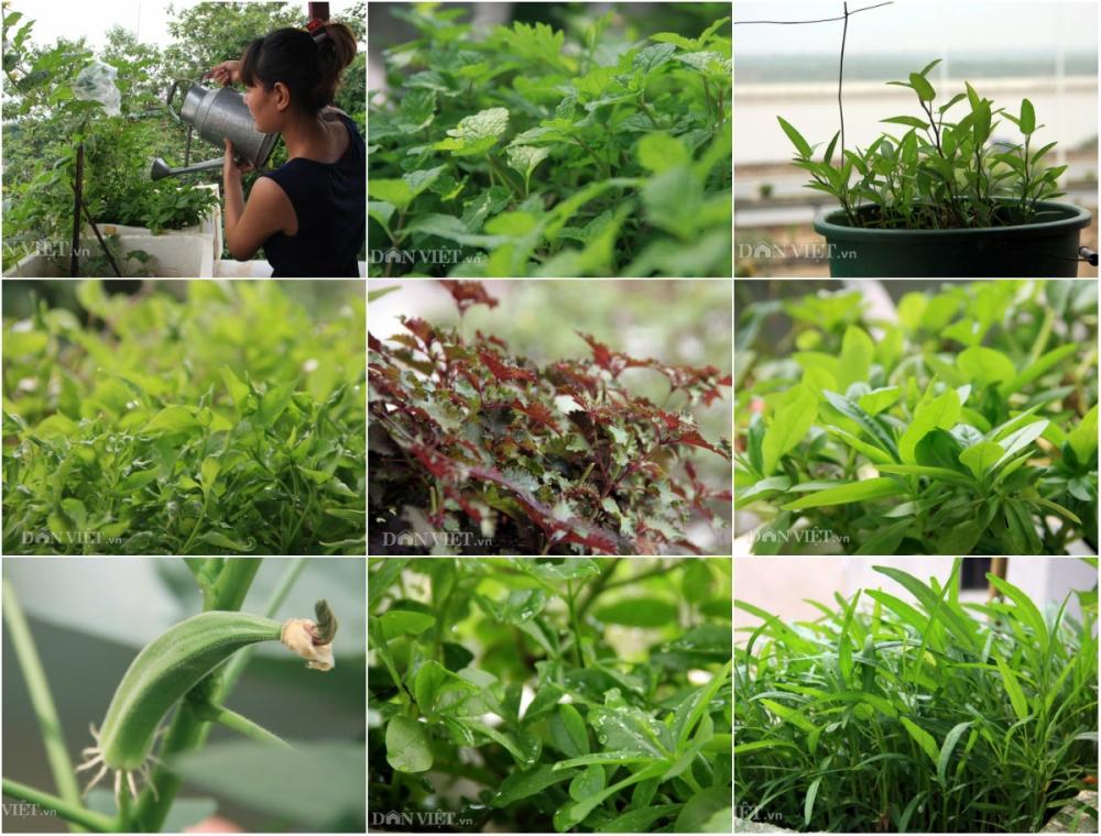 Chăm vườn rau sân thượng - tuyệt chiêu cơm lành canh ngọt của vợ chồng trẻ - 1