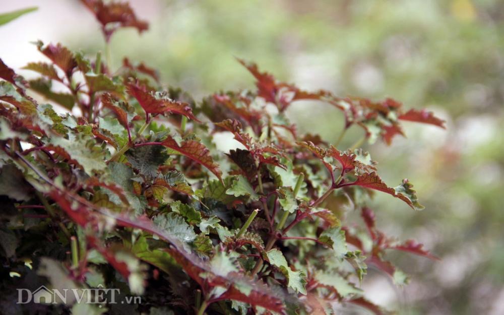 Chăm vườn rau sân thượng - tuyệt chiêu cơm lành canh ngọt của vợ chồng trẻ - 3