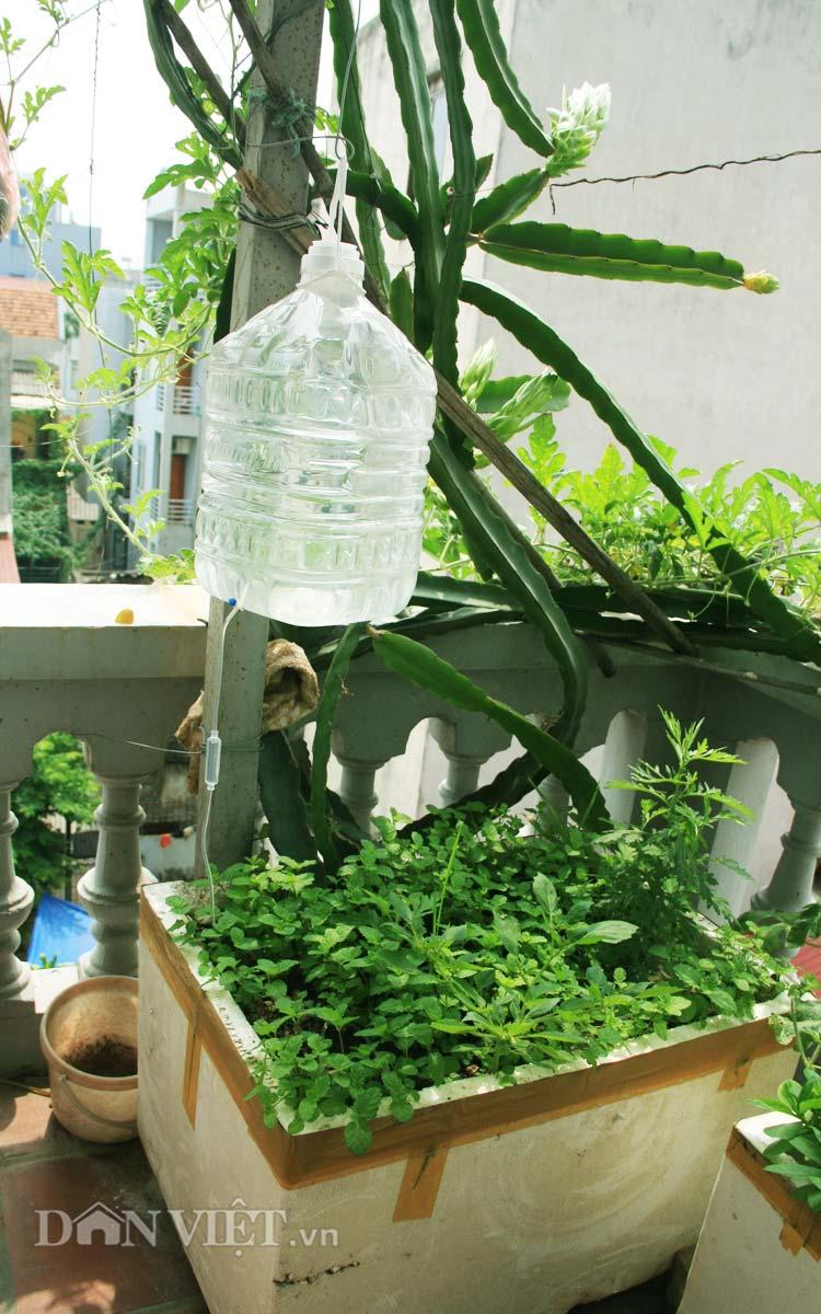 Chăm vườn rau sân thượng - tuyệt chiêu cơm lành canh ngọt của vợ chồng trẻ - 8