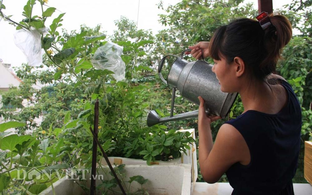 Chăm vườn rau sân thượng - tuyệt chiêu cơm lành canh ngọt của vợ chồng trẻ - 9