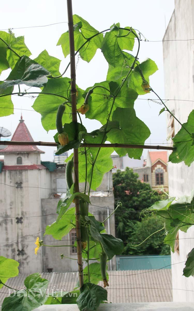 Chăm vườn rau sân thượng - tuyệt chiêu cơm lành canh ngọt của vợ chồng trẻ - 10