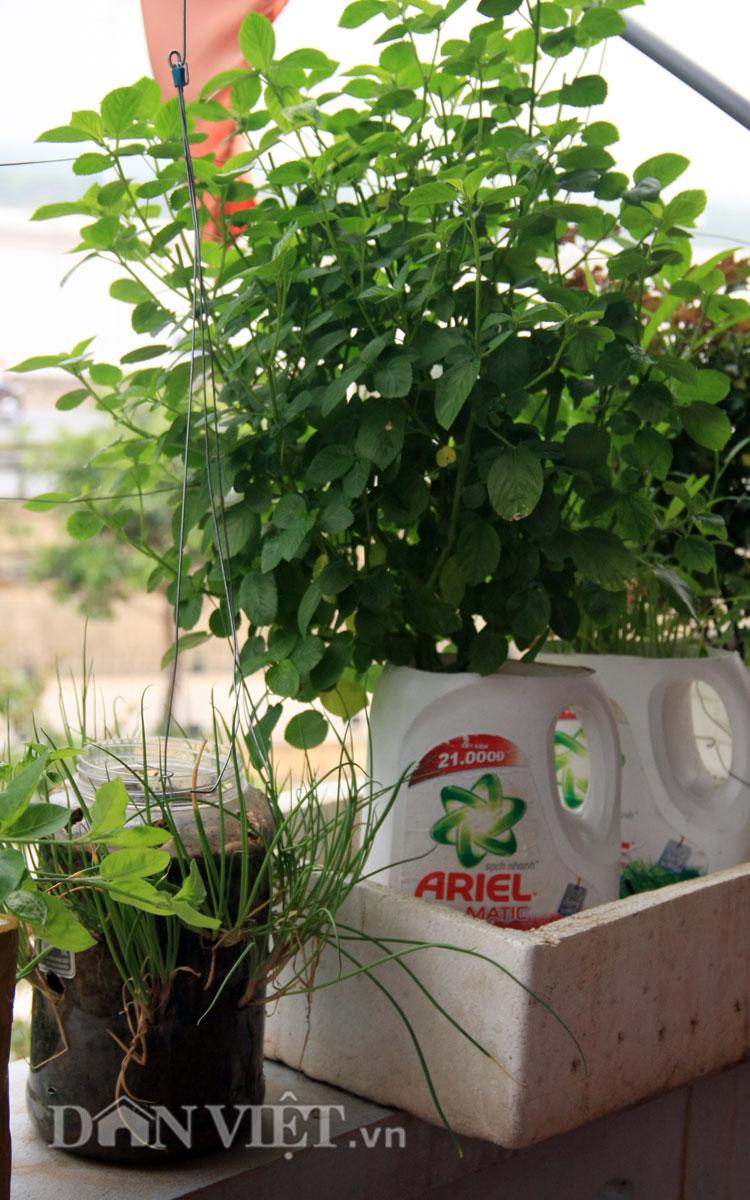 Chăm vườn rau sân thượng - tuyệt chiêu cơm lành canh ngọt của vợ chồng trẻ - 13
