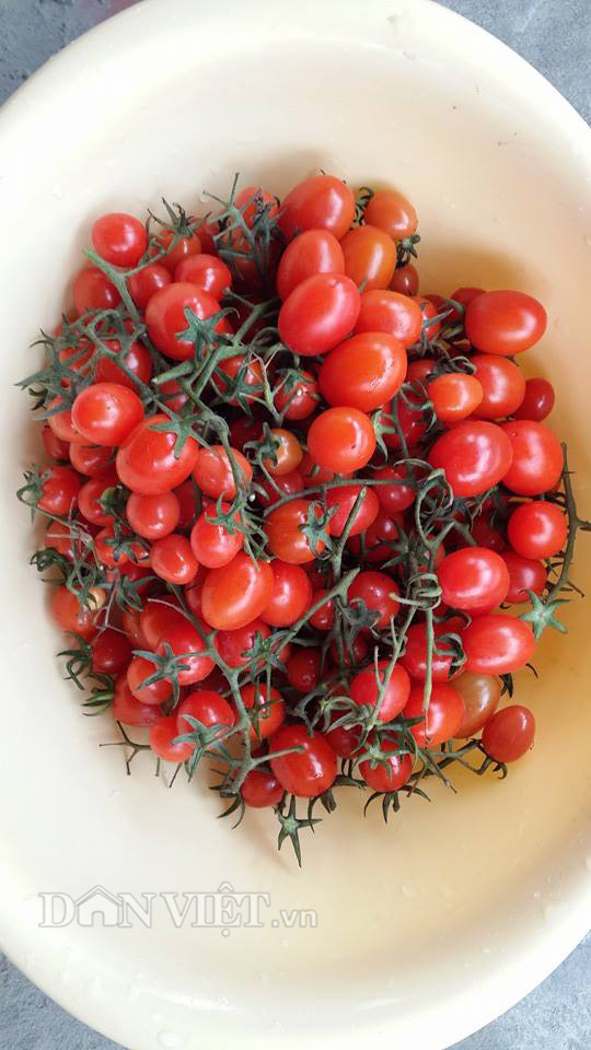 Chăm vườn rau sân thượng - tuyệt chiêu cơm lành canh ngọt của vợ chồng trẻ - 15