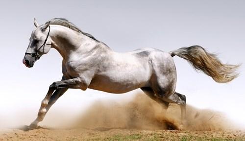 Nếu người thi chạy đua với ngựa thì bên nào sẽ thắng - 2