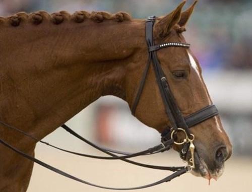 Vận động viên đoạt huy chương vàng đã rút khỏi olympic để cứu chú ngựa - 3