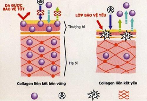 dưỡng da mùa thu mịn màng với mỹ phẩm chứa hyaluronic axit - 1