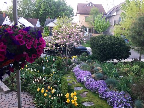 chàng giám đốc nhổ từng cọng cỏ để có khu vườn đẹp - 4