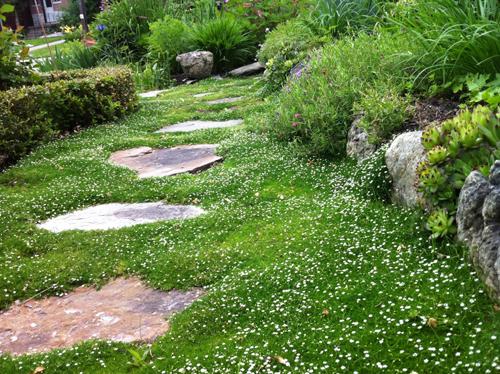 chàng giám đốc nhổ từng cọng cỏ để có khu vườn đẹp - 9