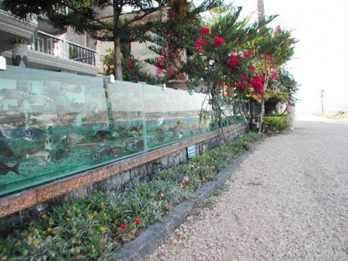 đại gia dùng bể cá bạch tuộc làm hàng rào quanh nhà - 2