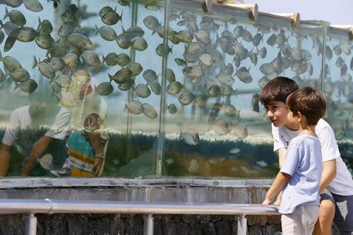 đại gia dùng bể cá bạch tuộc làm hàng rào quanh nhà - 5