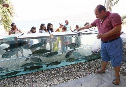 đại gia dùng bể cá bạch tuộc làm hàng rào quanh nhà - 6