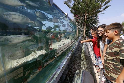 đại gia dùng bể cá bạch tuộc làm hàng rào quanh nhà - 7