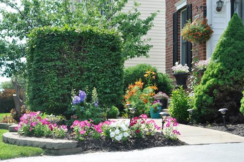 khu vườn ngập sắc hoa của giảng viên người việt ở mỹ - 4