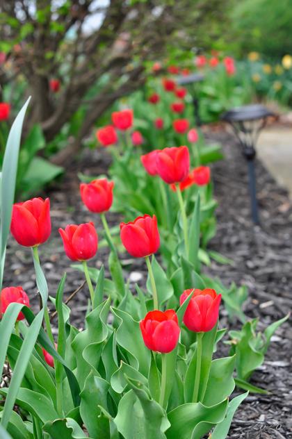 khu vườn ngập sắc hoa của giảng viên người việt ở mỹ - 6