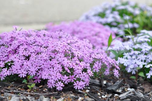 khu vườn ngập sắc hoa của giảng viên người việt ở mỹ - 8
