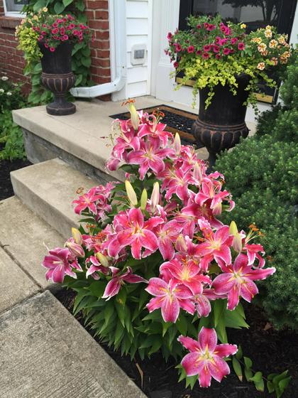 khu vườn ngập sắc hoa của giảng viên người việt ở mỹ - 9