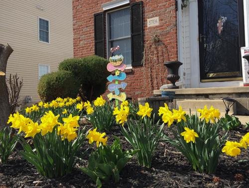 khu vườn ngập sắc hoa của giảng viên người việt ở mỹ - 10