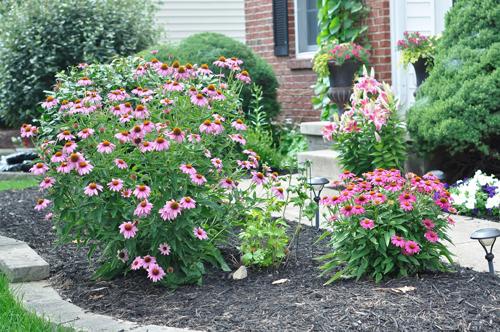 khu vườn ngập sắc hoa của giảng viên người việt ở mỹ - 11