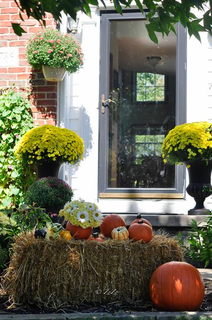 khu vườn ngập sắc hoa của giảng viên người việt ở mỹ - 12
