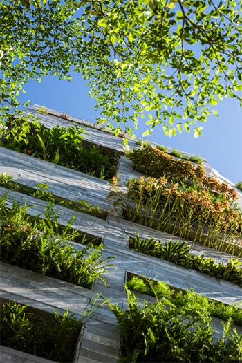 những ngôi nhà việt phủ kín cây xanh tạo dấu ấn trên báo mỹ - 4