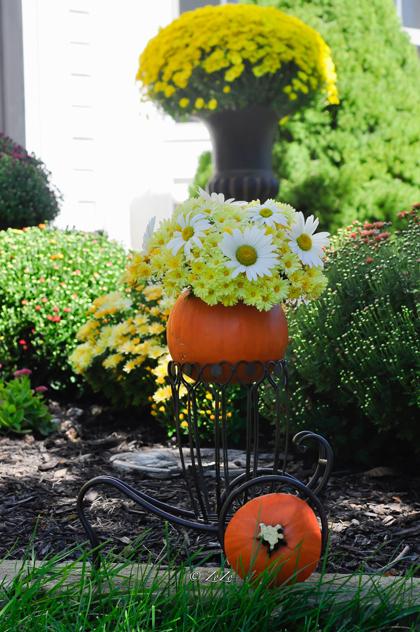tài trang trí cho ngôi nhà từ hoa trái tự trồng của chị thu hoài - 2