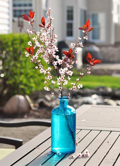 tài trang trí cho ngôi nhà từ hoa trái tự trồng của chị thu hoài - 5