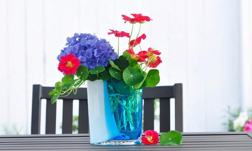 tài trang trí cho ngôi nhà từ hoa trái tự trồng của chị thu hoài - 11