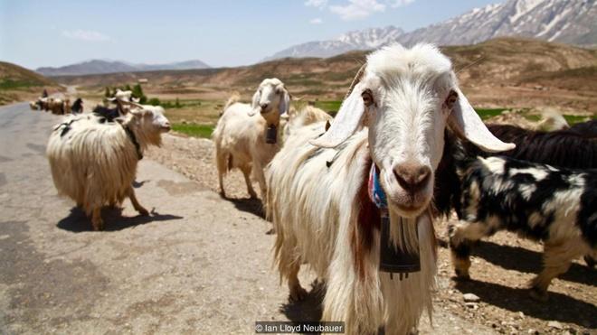 Dòng sông băng bí ẩn giữa sa mạc iran - 6