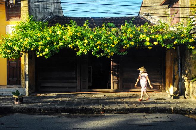 Hội an rực vàng trong ánh nắng - 8