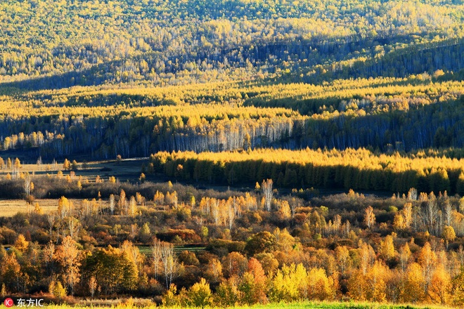 Mùa thu nhuộm sắc vàng ở trung quốc - 8