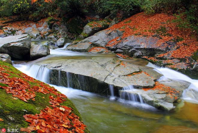 Mùa thu nhuộm sắc vàng ở trung quốc - 9