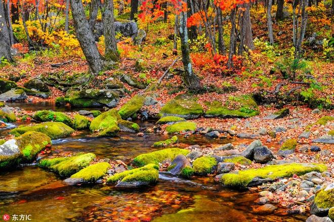 Mùa thu nhuộm sắc vàng ở trung quốc - 10