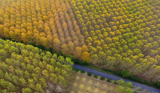 Mùa thu vàng ở lithuania - 6