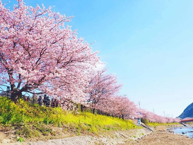 Ngôi làng nhật rực hồng mùa hoa anh đào - 5