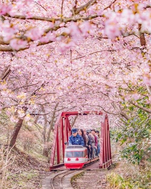 Ngôi làng nhật rực hồng mùa hoa anh đào - 6