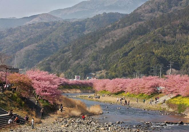 Ngôi làng nhật rực hồng mùa hoa anh đào - 8