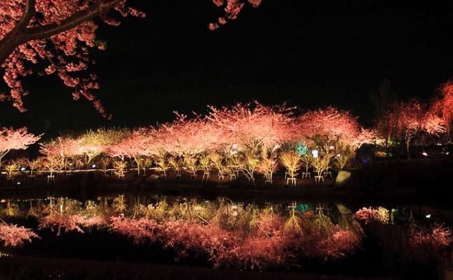 Ngôi làng nhật rực hồng mùa hoa anh đào - 10